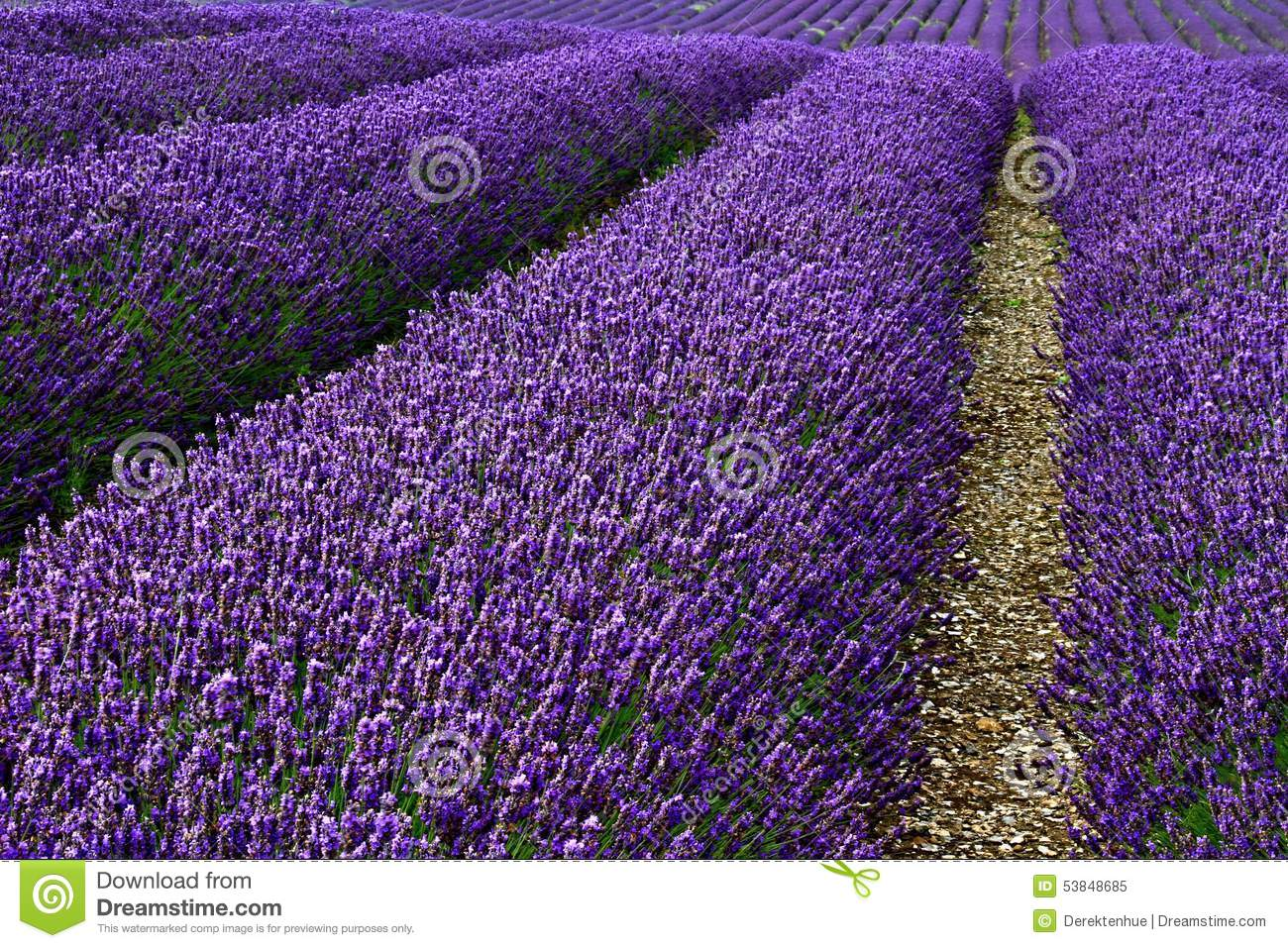 Lavender farm business plan