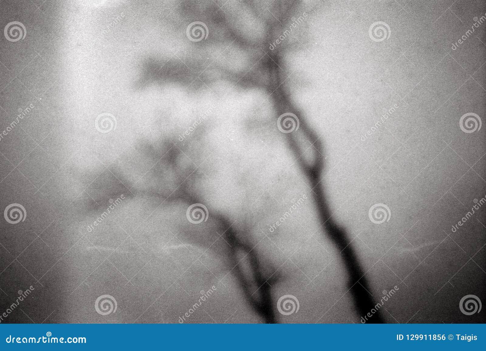 Lawaaierig filmkader met boomtakken