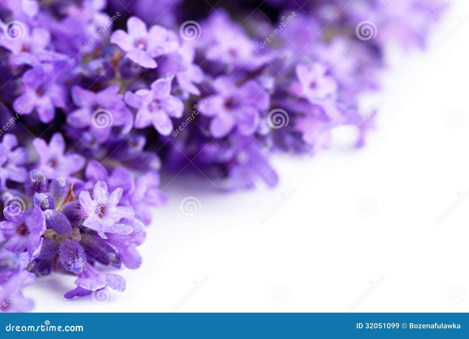 Lawenda kwiaty