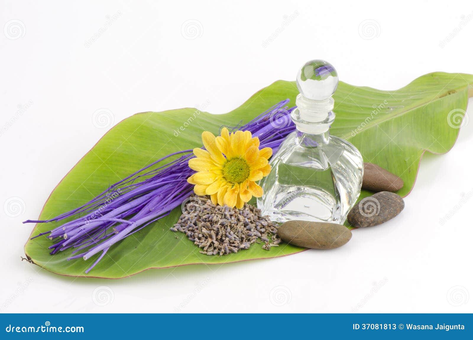 Download Lawenda (Lavandula Angustifolia (Zjednoczone Królestwo). Obraz Stock - Obraz złożonej z aromatyczny, bezzapachowy: 37081813