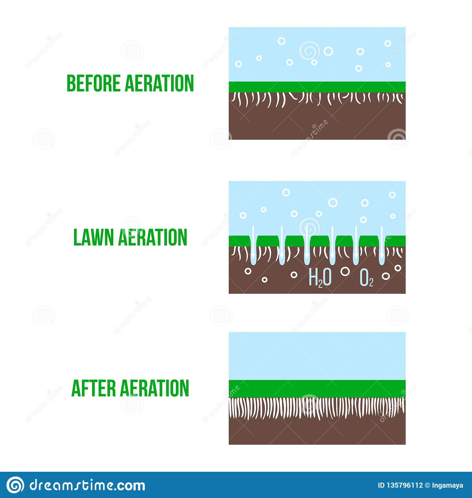 Lawn aeration stage illustration. Gardening grass lawncare, landscaping service. Vector isolated on white