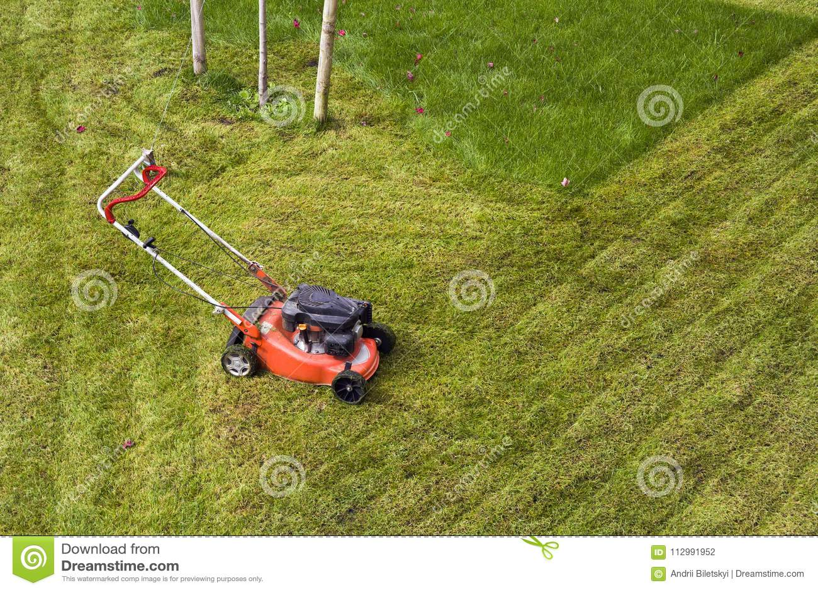 Lawn mower cutting grass on green field in yard. Mowing gardener care work tool