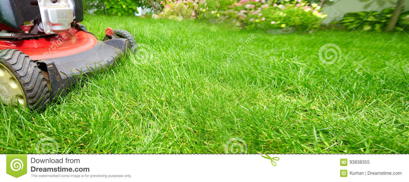 Download Lawn mower stock image. Image of fertilizing, herb, greenfodder - 93838355