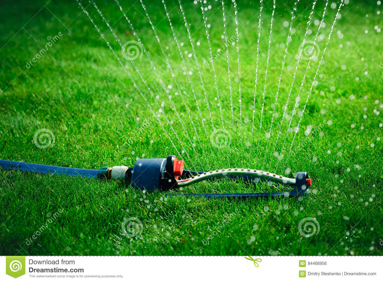Lawn Sprinkler Spaying Water Over Green Grass Stock Photo