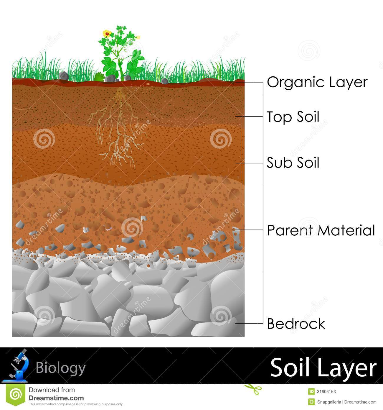 Layer Of Soil Stock Illustration  Illustration Of