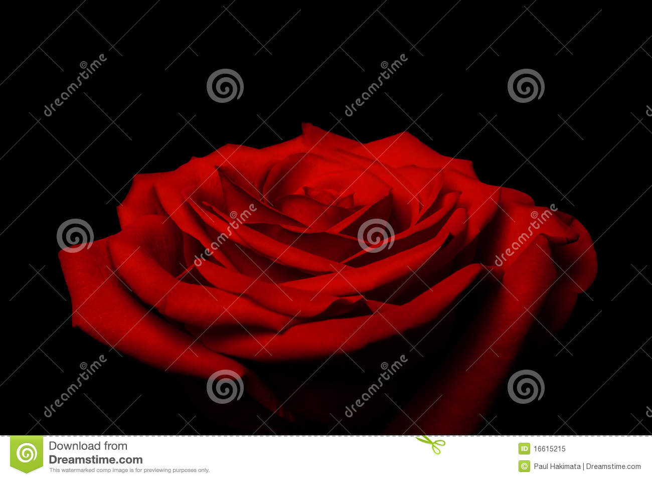 Layers of love petals - red rose