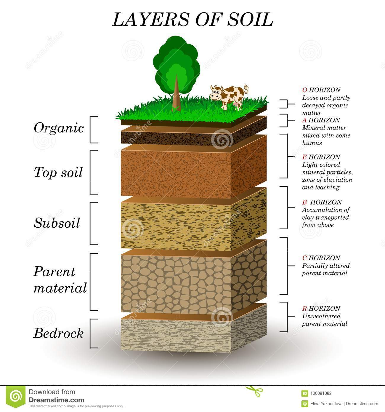 Layers of soil education diagram mineral particles sand humus layers of soil education diagram mineral particles sand humus and stones pooptronica Images