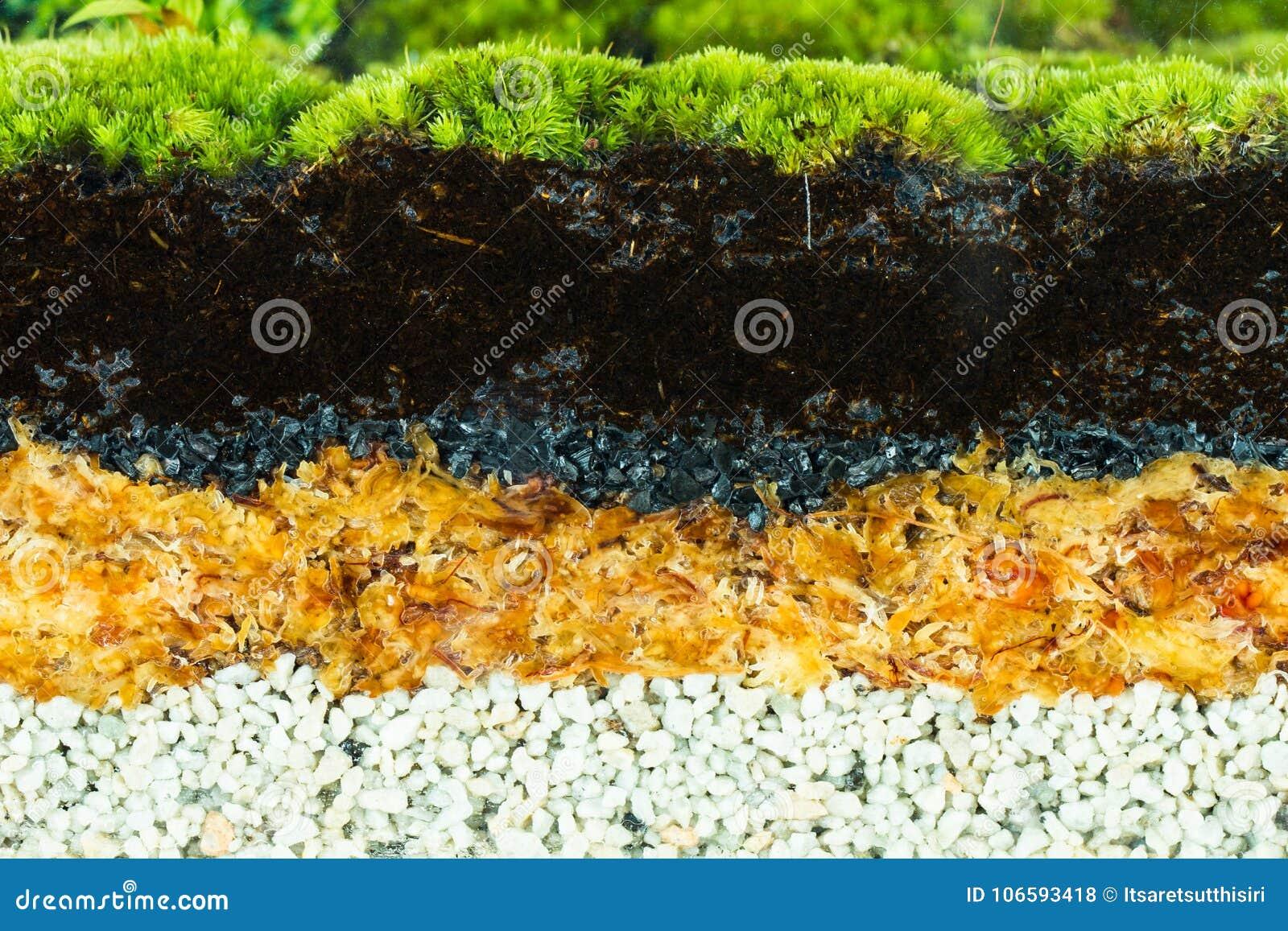 Layers Of Terrarium Stock Photo Image Of Garden Drawn 106593418