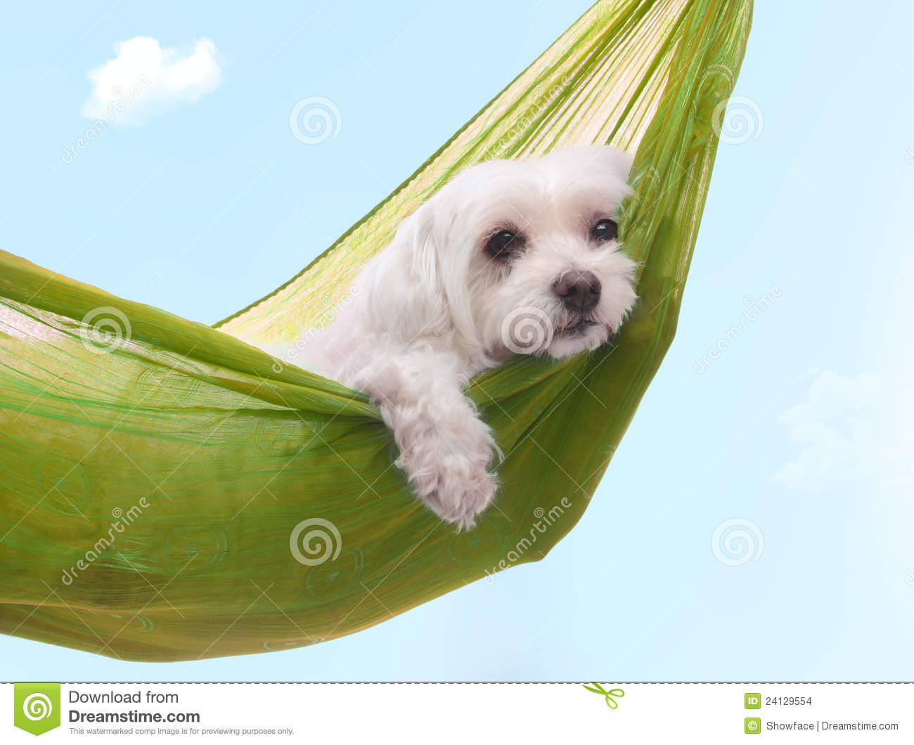 lazy dazy dog days of summer stock images image 24129554 clip art puppies peeing clip art puppies tgif