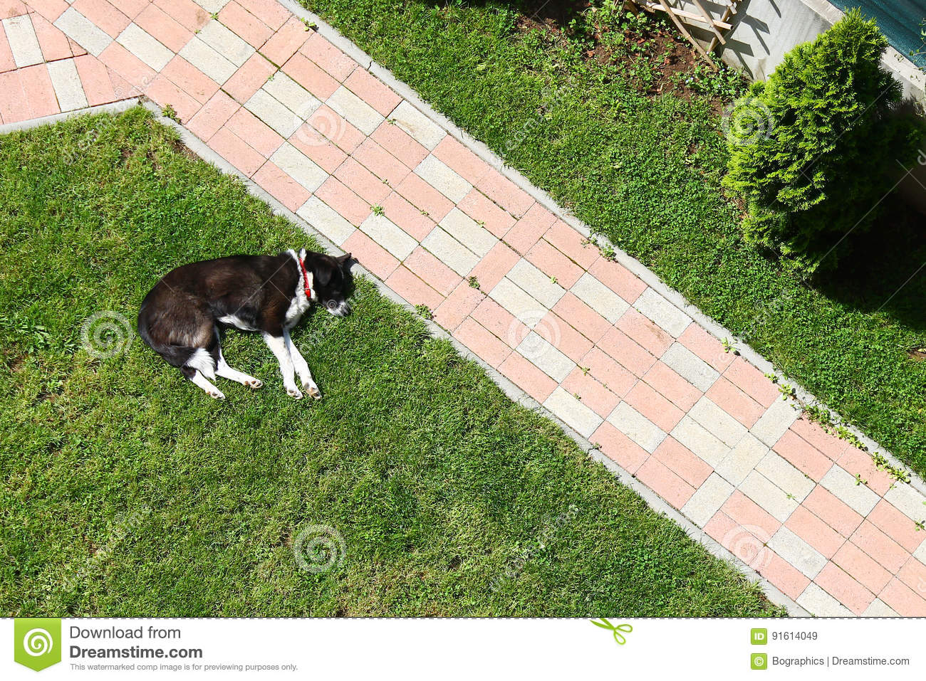 Download Lazy Dog Sleeping On Lawn Yard Near Alley Stock Image - Image of green, sleeping: 91614049