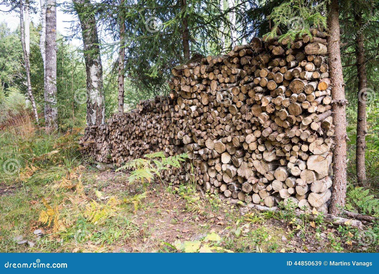 Download Leña Apilada De La Picea En El Bosque Imagen de archivo - Imagen de energía, leña: 44850639
