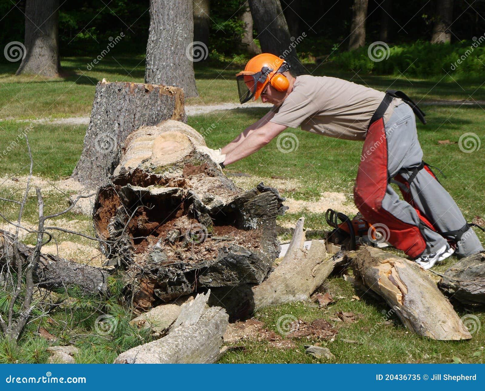 Leñadores: hombre que empuja el árbol caido