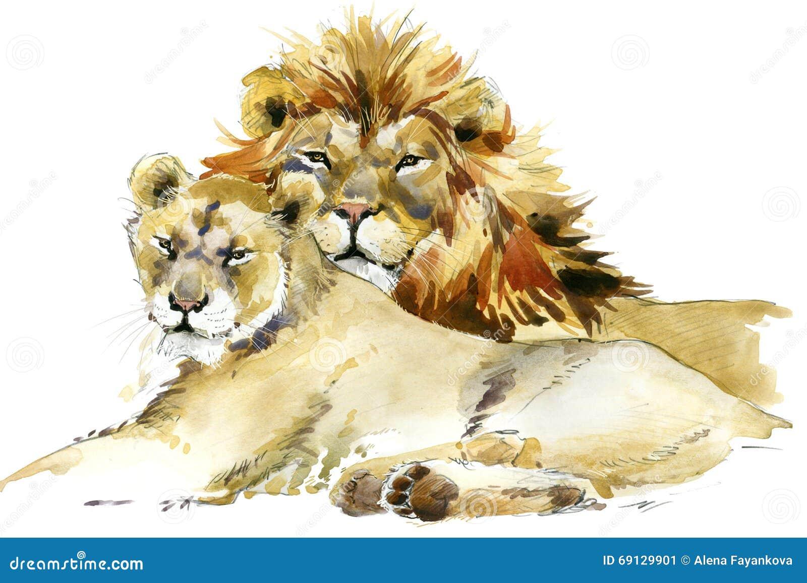 León Acuarela del ejemplo del orgullo del león