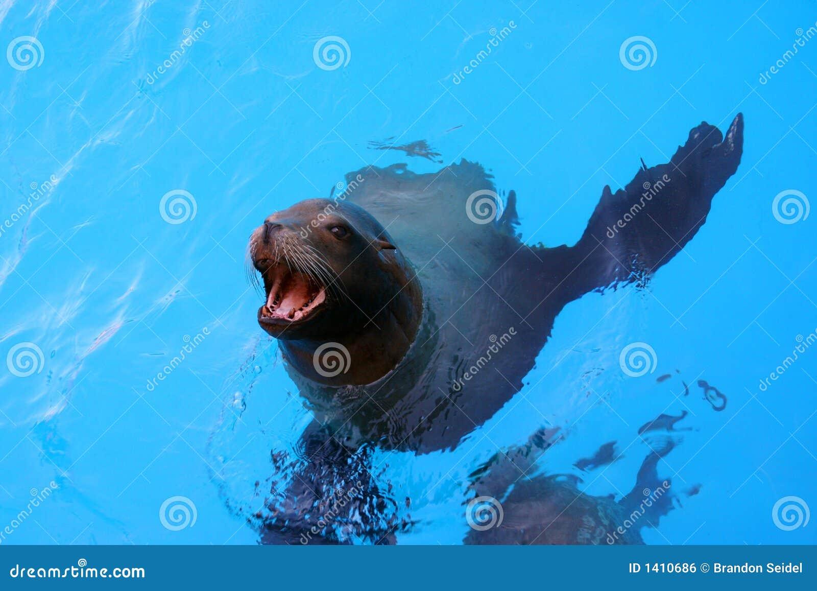 León de mar