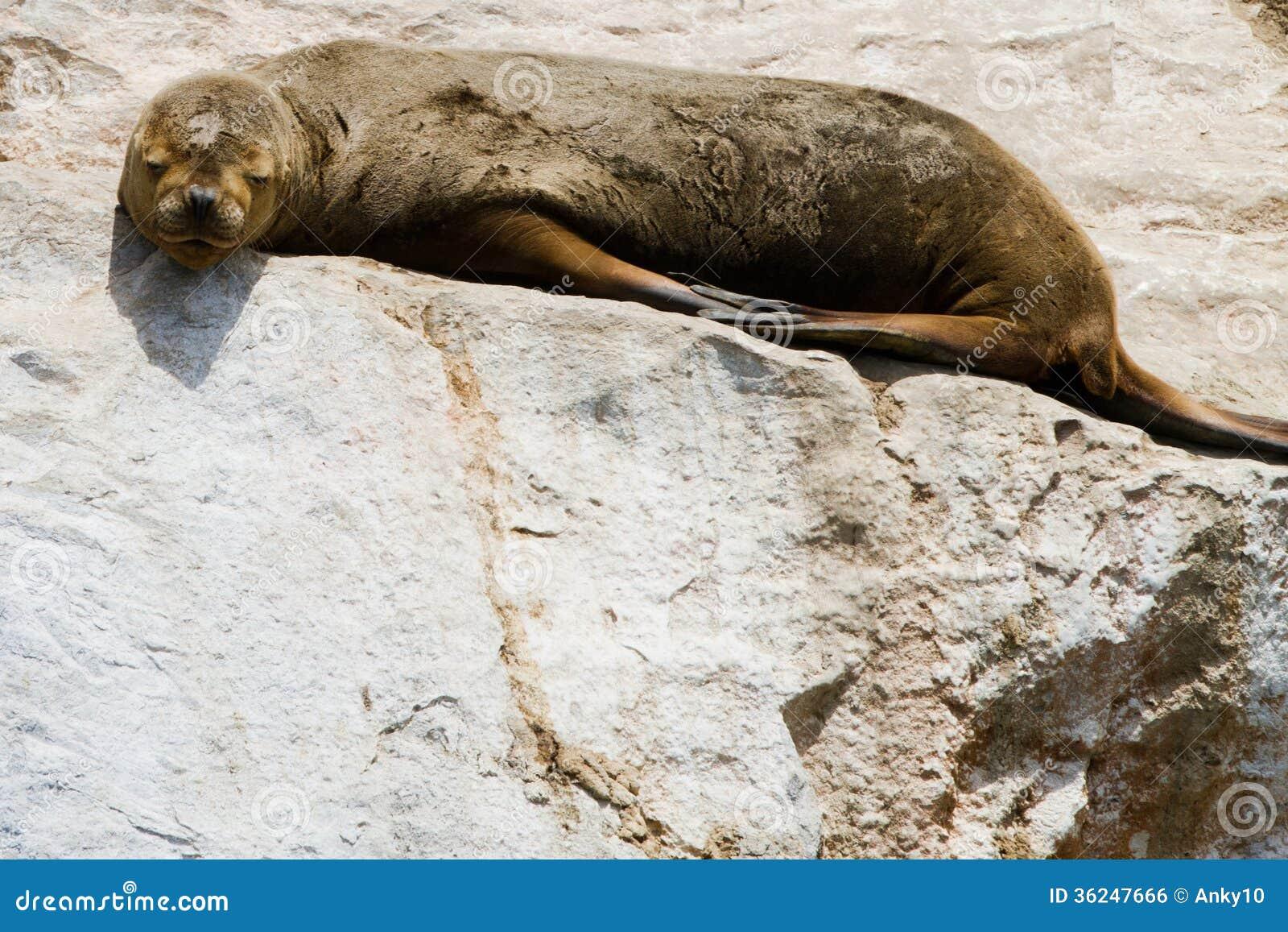 Le n marino en punta de choros chile for Isla leon piscina