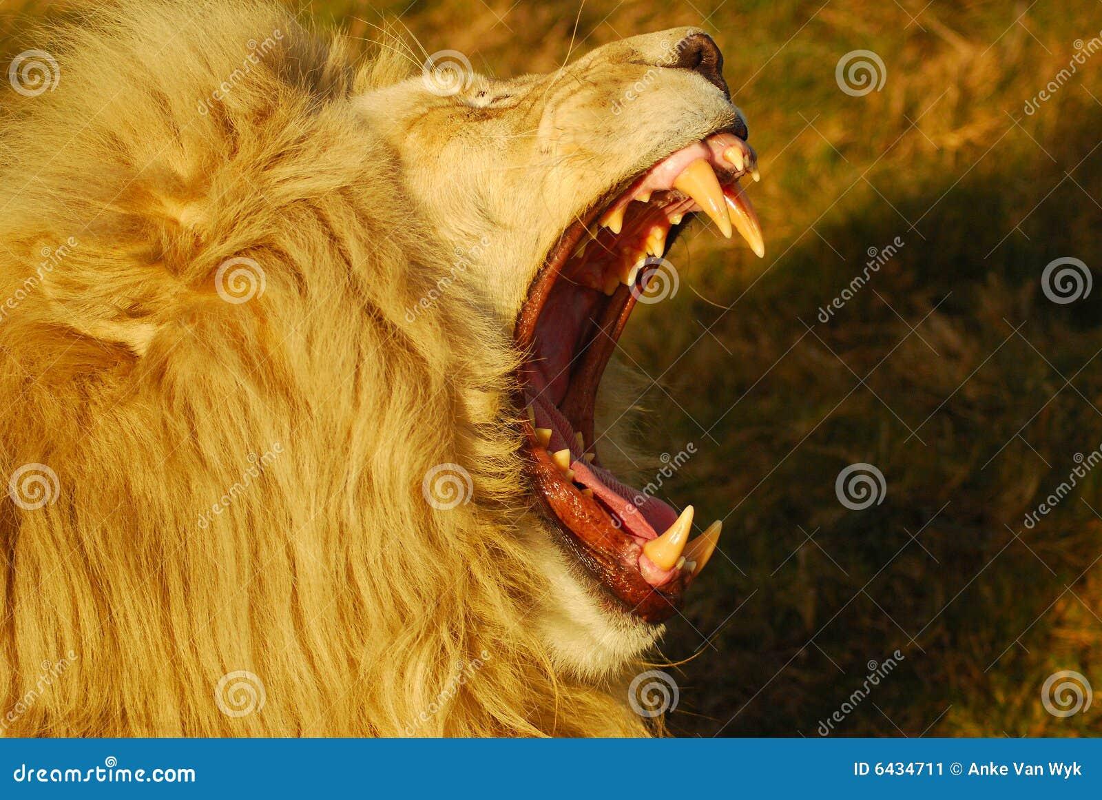 León que ruge