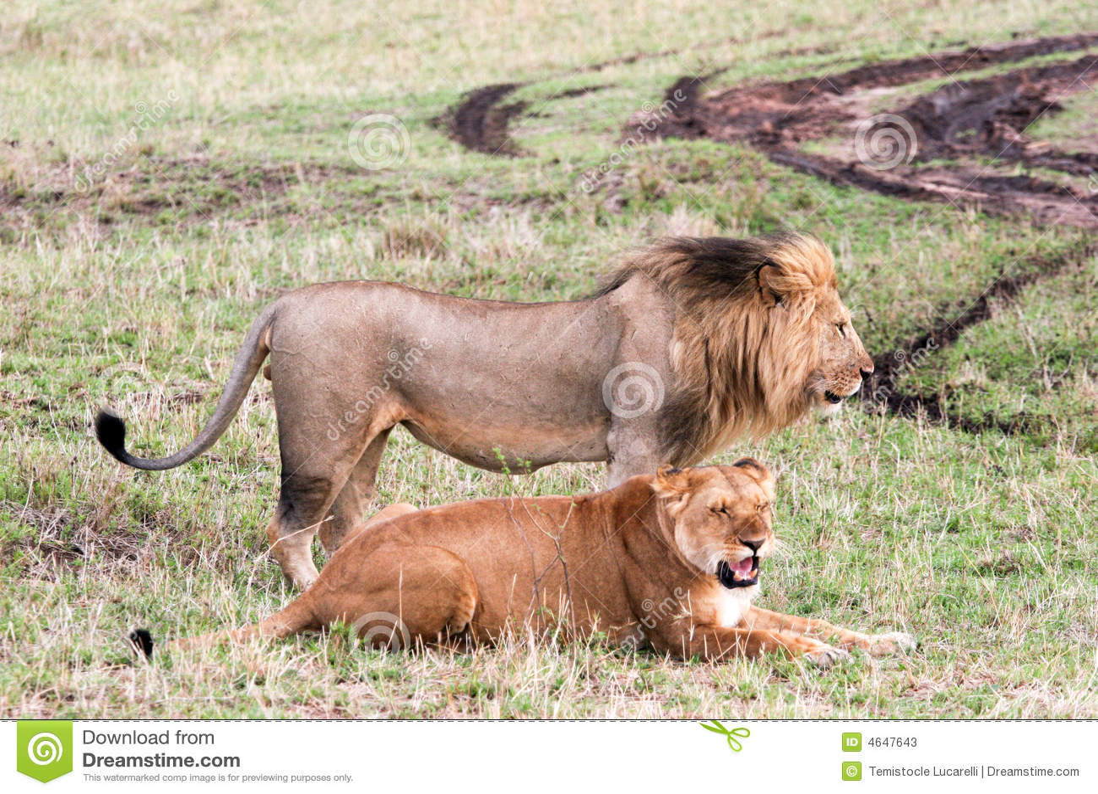 Leões de acoplamento