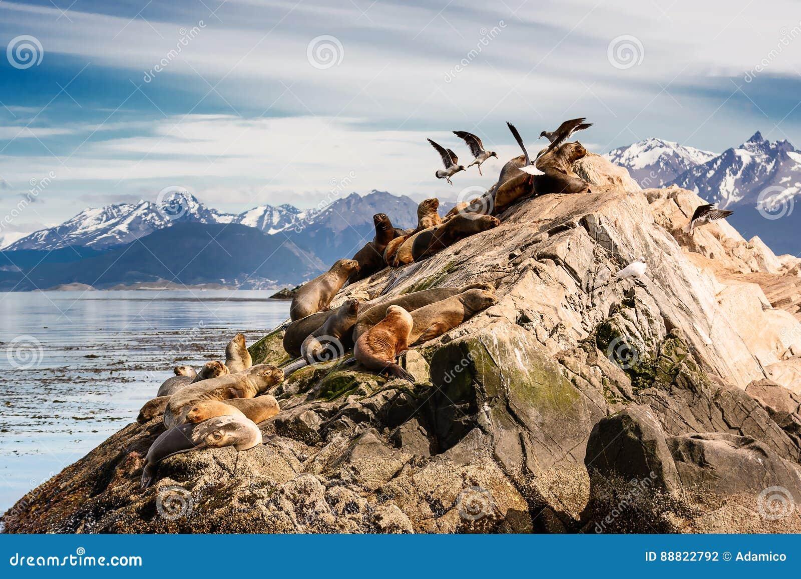 Leões de mar e Albatros no isla no canal do lebreiro perto de Ushuaia