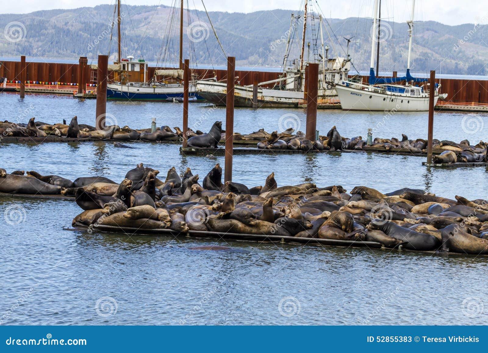 Leões e selos noroestes pacíficos de mar