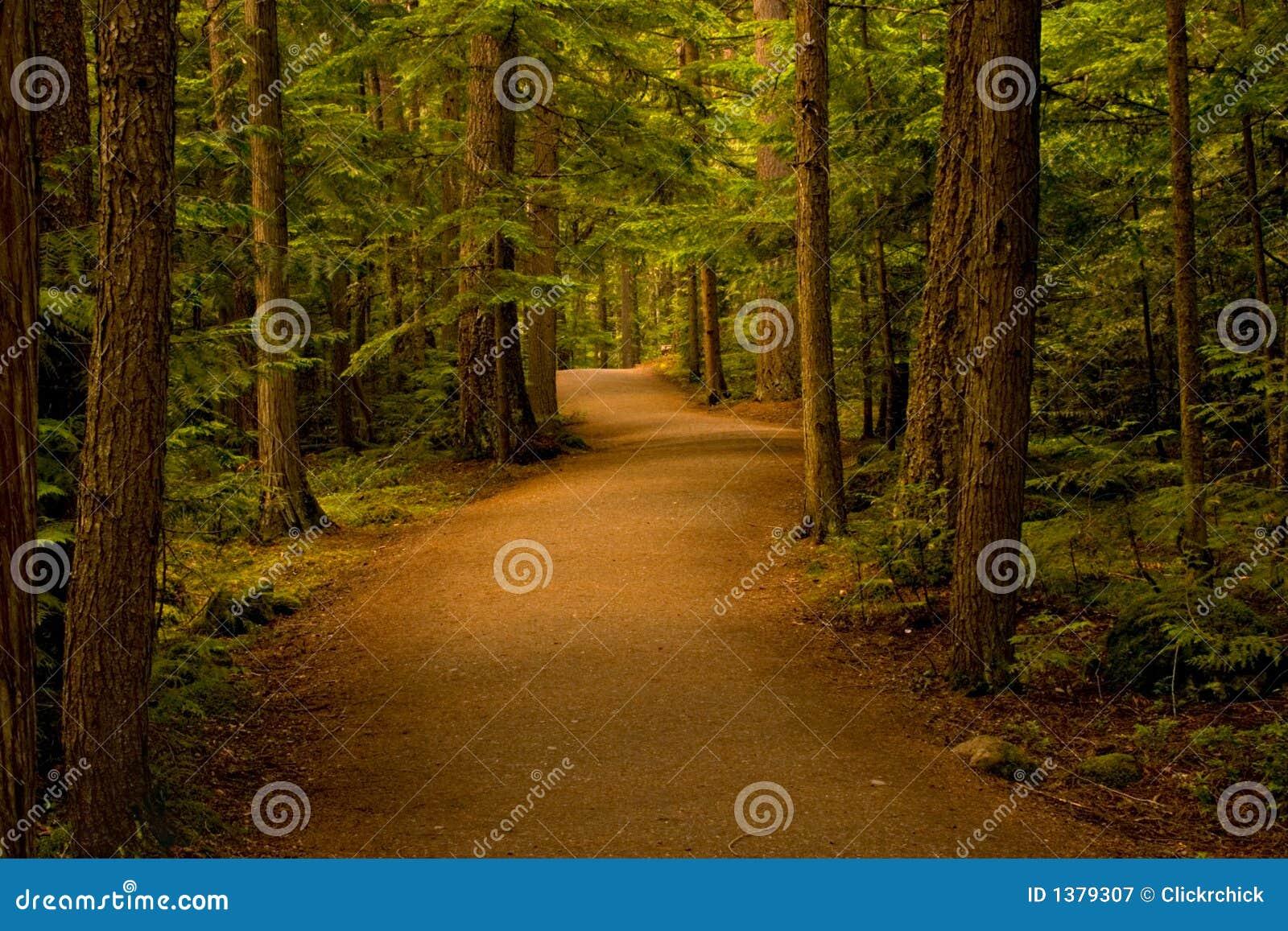 Leśną ścieżki lasu