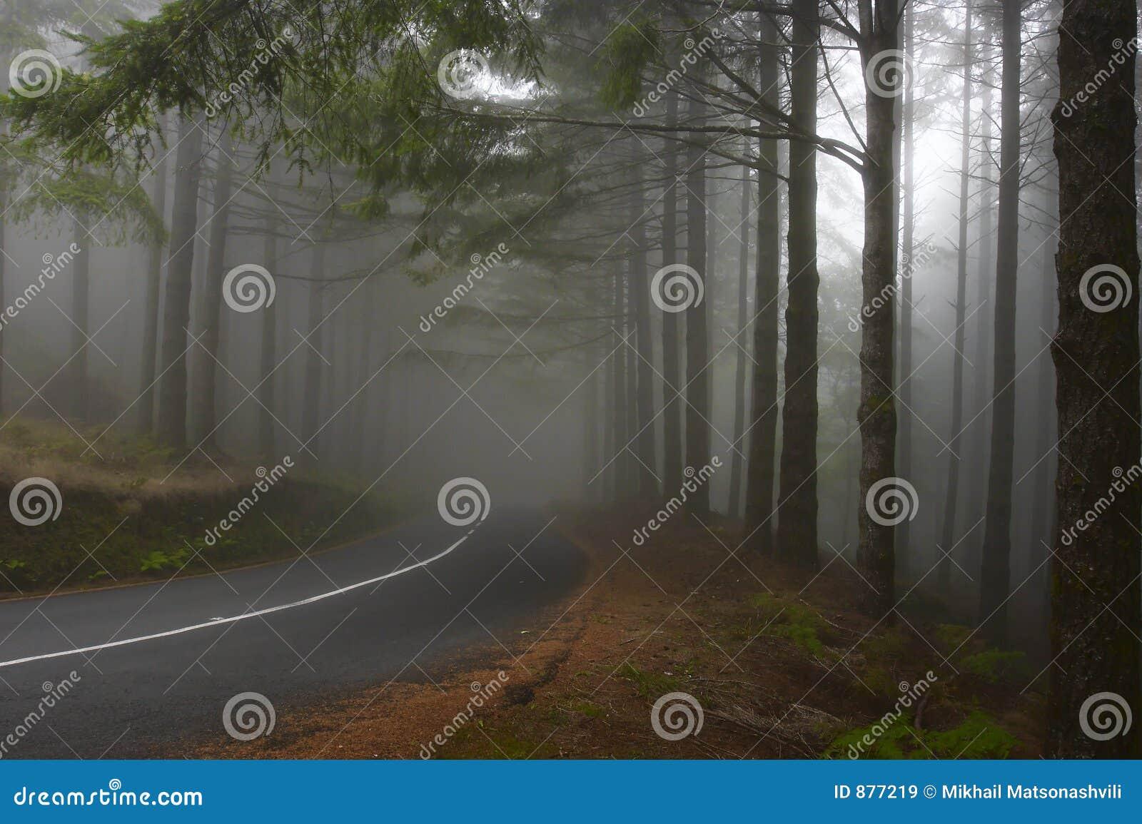 Leśna mgła.