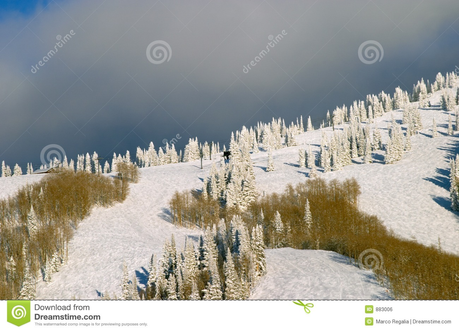 Leśna zimy mountain
