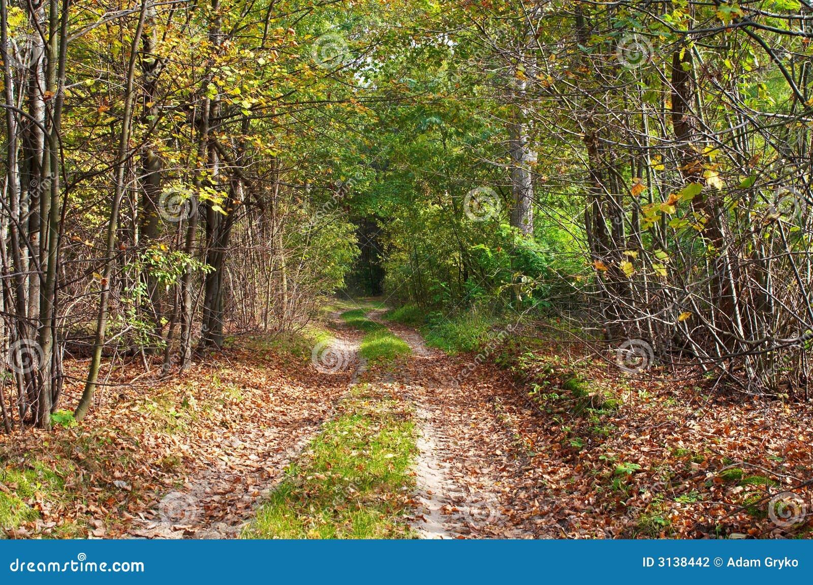 Leśny lane