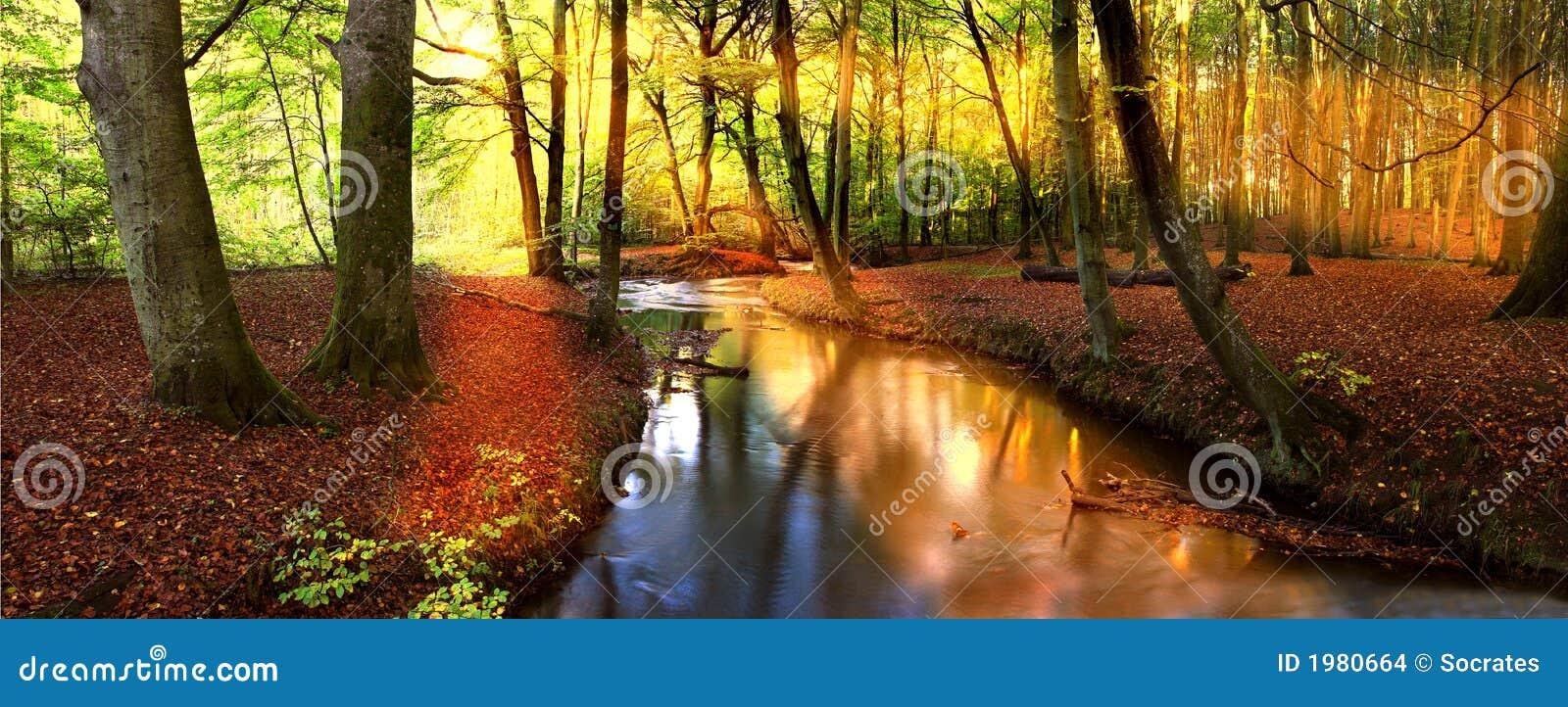Leśny popołudniowe słońce