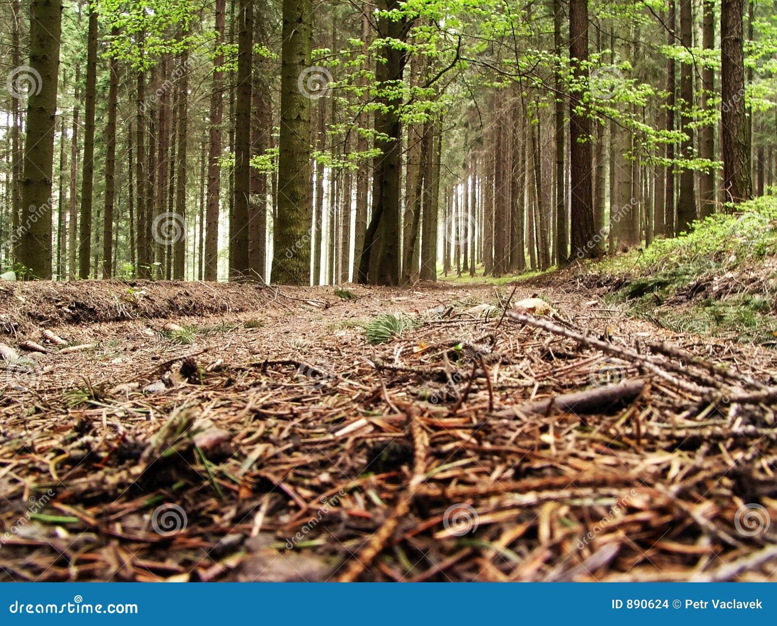 Leśny sposób