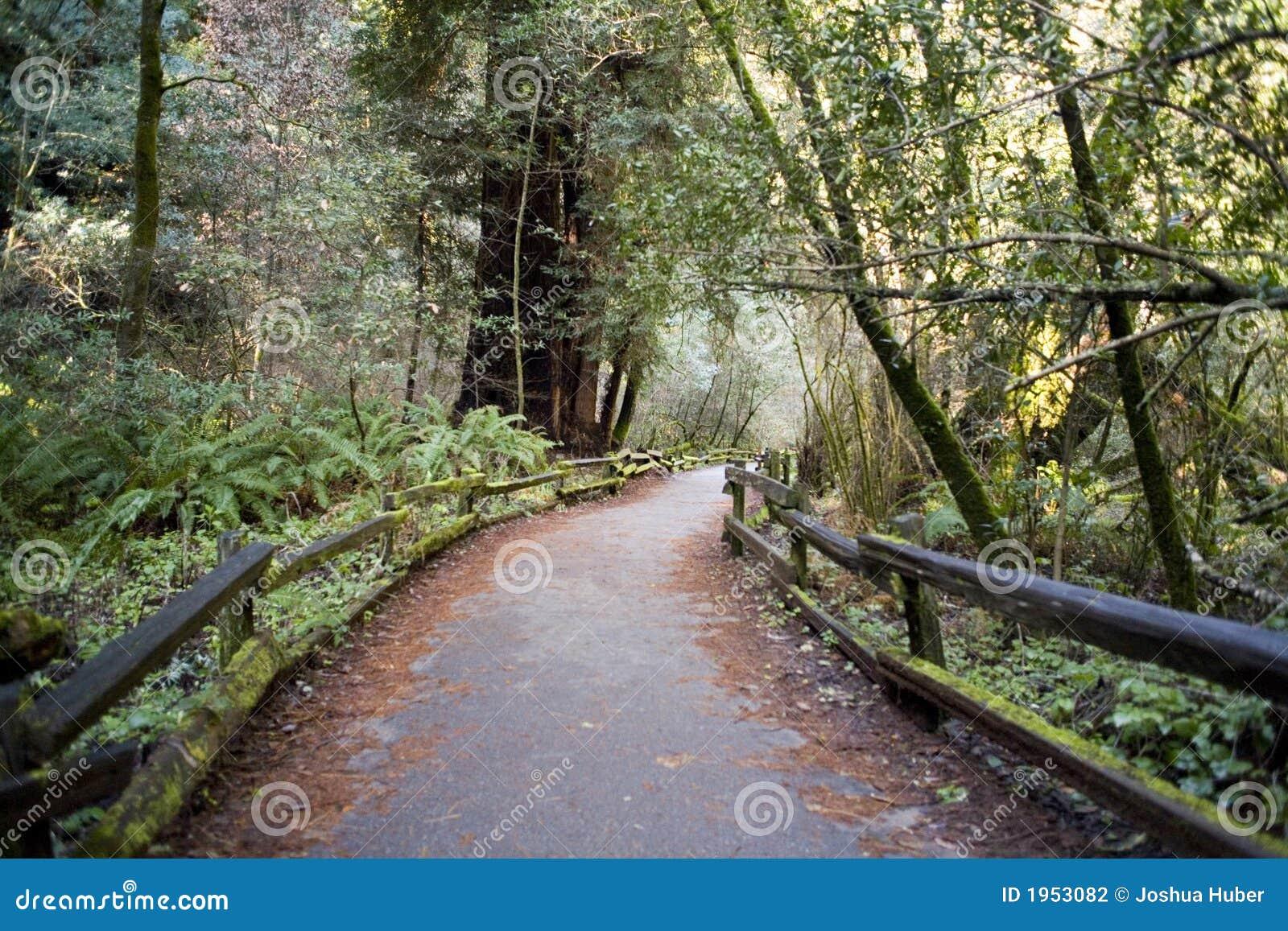 Leśny toru