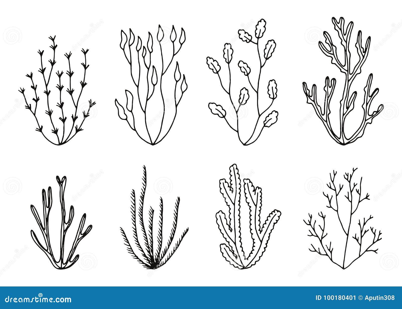 Le Alghe Vector L Insieme Disegni Della Mano Isolati Illustrazione