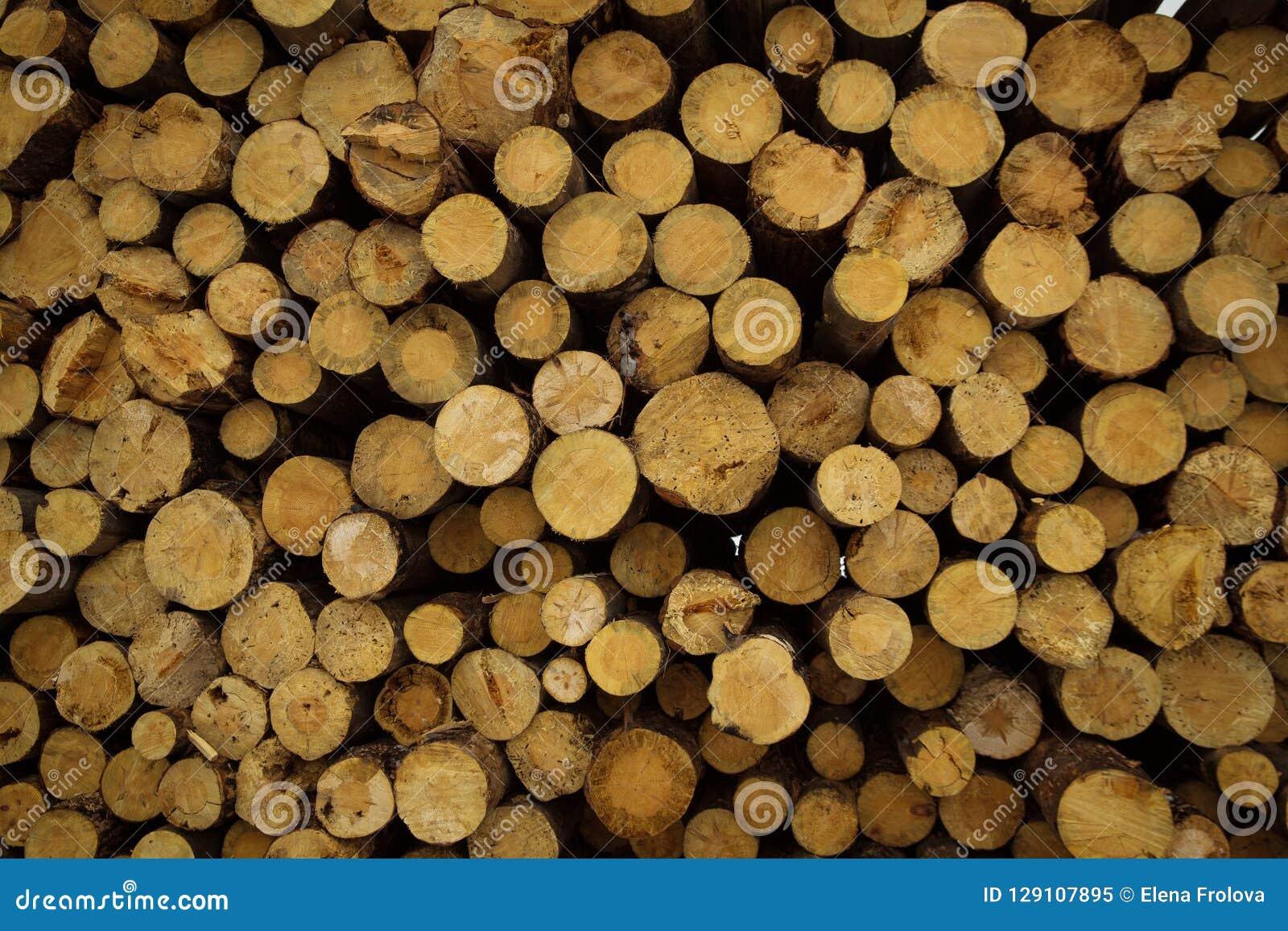 Le azione di collegano il disboscamento industriale della foresta dell inverno