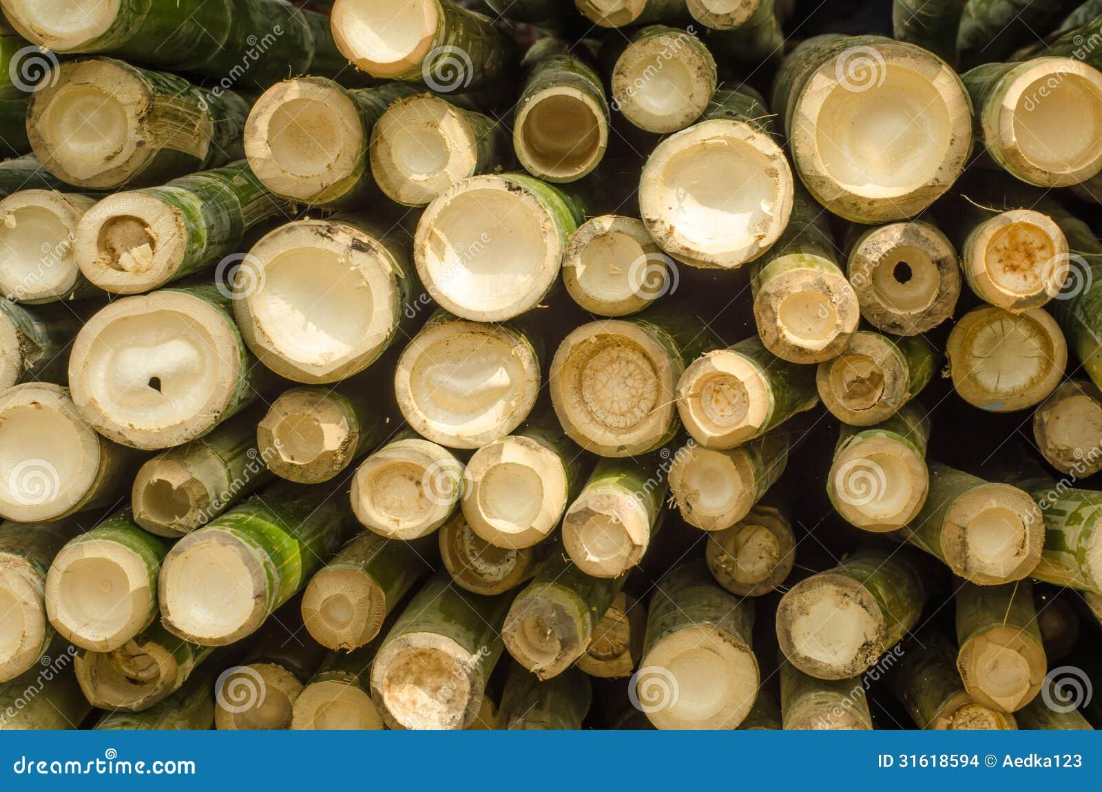 Le bambou de coupe images stock image 31618594 - Replanter un bambou coupe ...