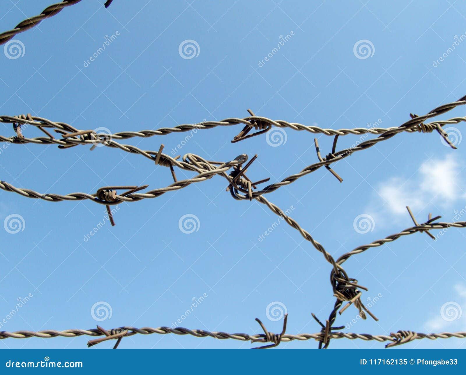 Le barbelé sur le ciel bleu a perdu le concept de camp de réfugié d emprisonnement de liberté