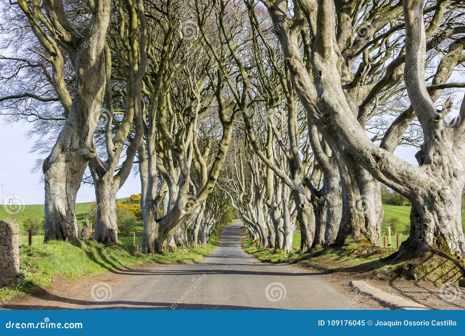 Le barriere scure, Irlanda del Nord