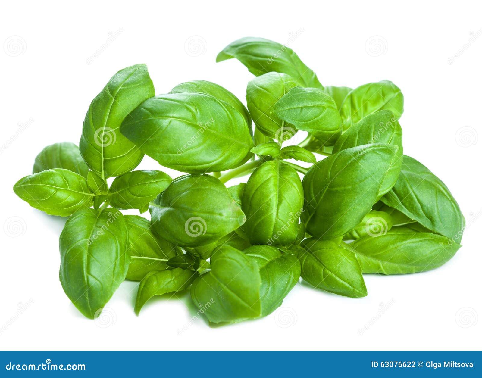 Download Le Basilic Frais Laisse L'herbe D'isolement Photo stock - Image du culinaire, organique: 63076622