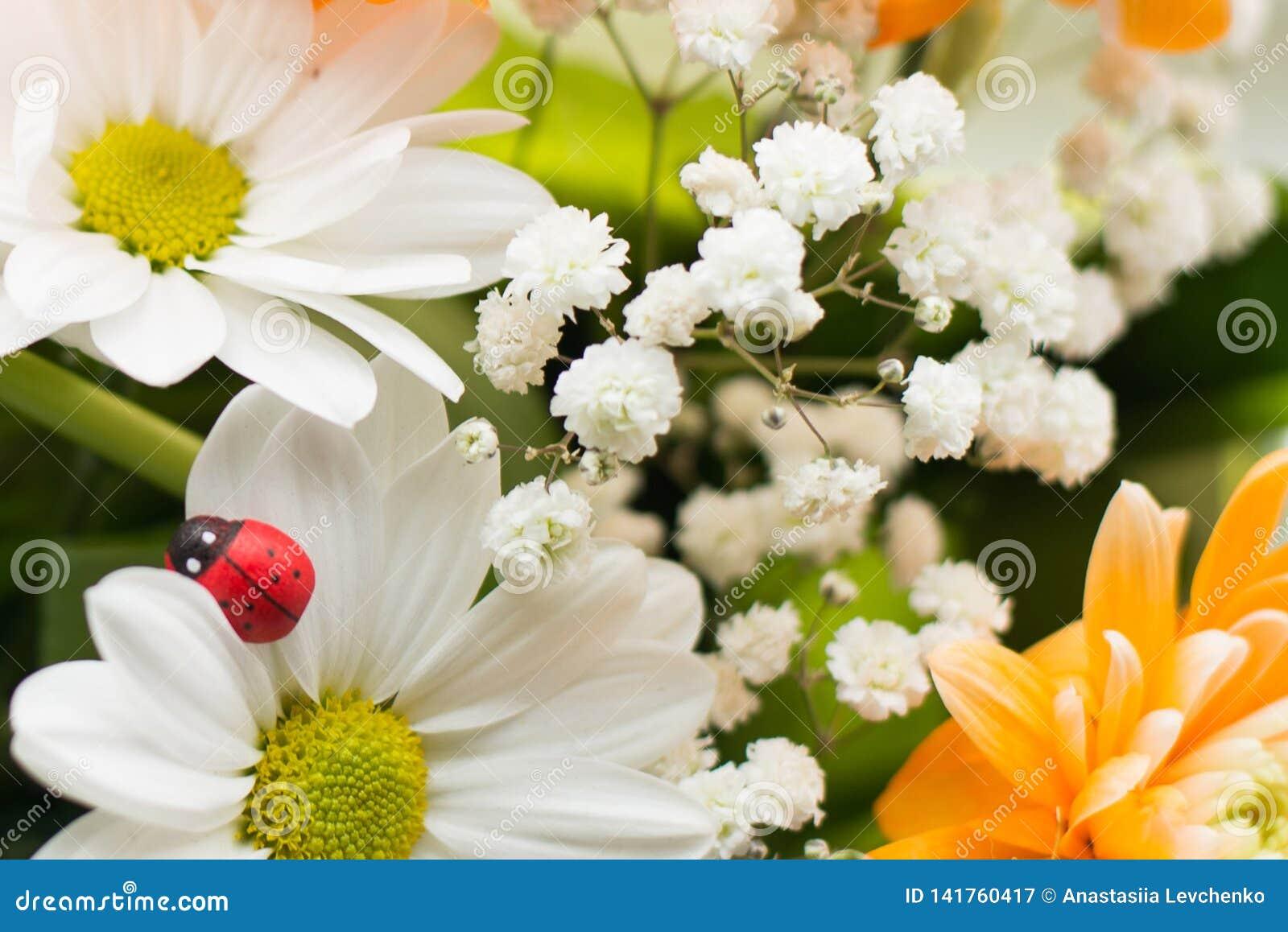 Le beau jardin d été ou de ressort avec la marguerite fleurit