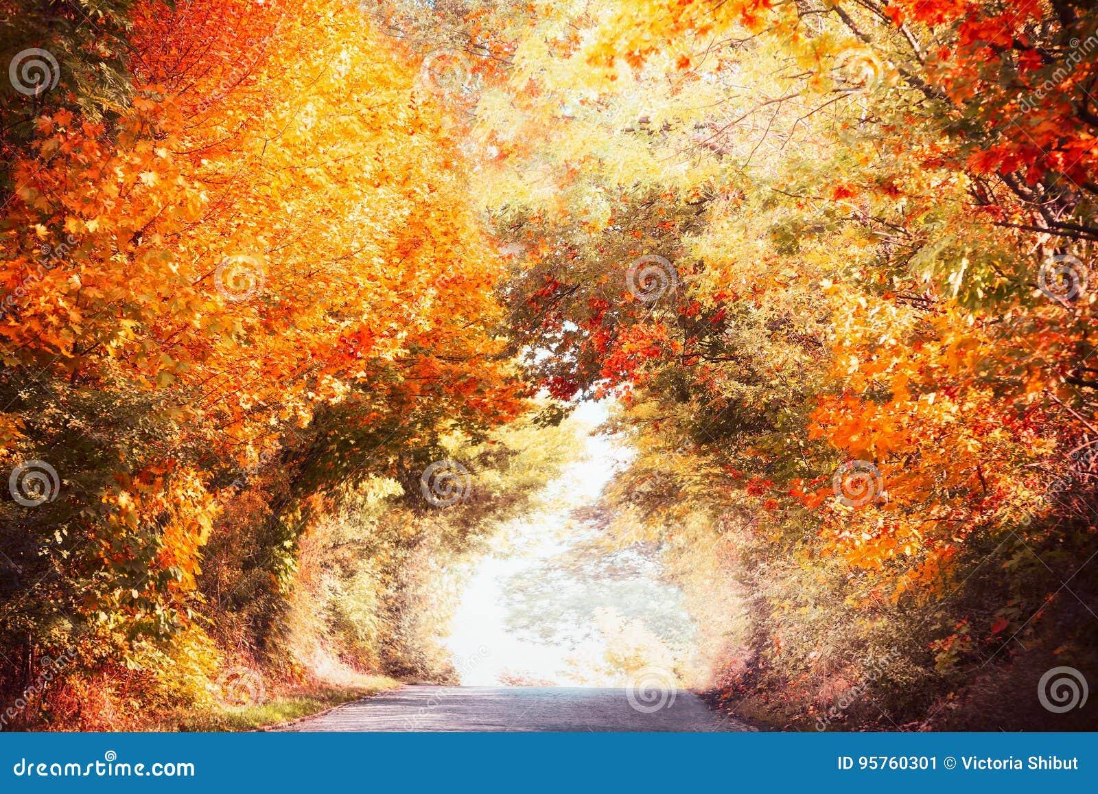 Le beau paysage d allée d automne avec le feuillage d automne coloré des arbres et de la lumière du soleil, tombent nature extéri