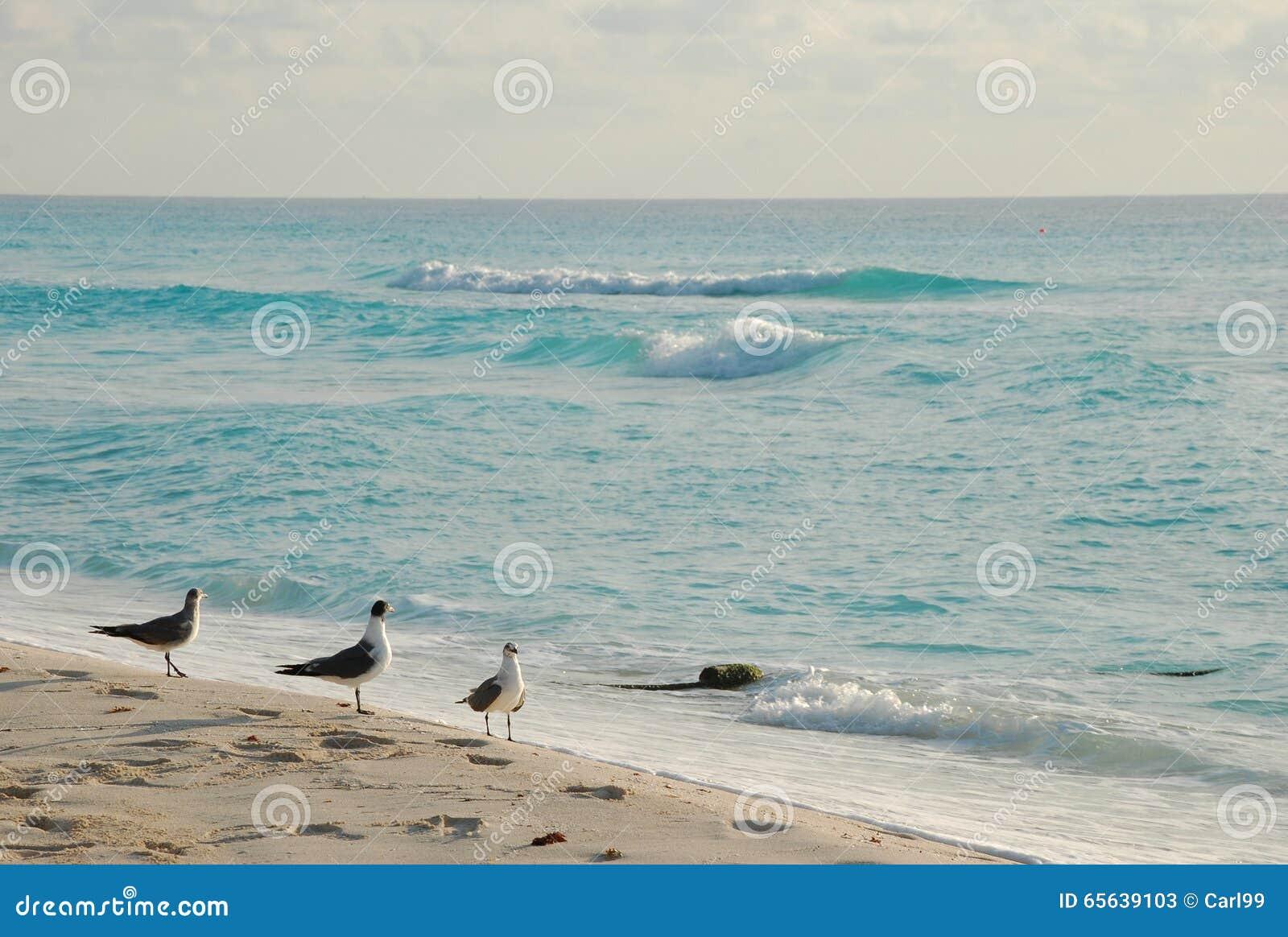 Le beau paysage de bord de la mer