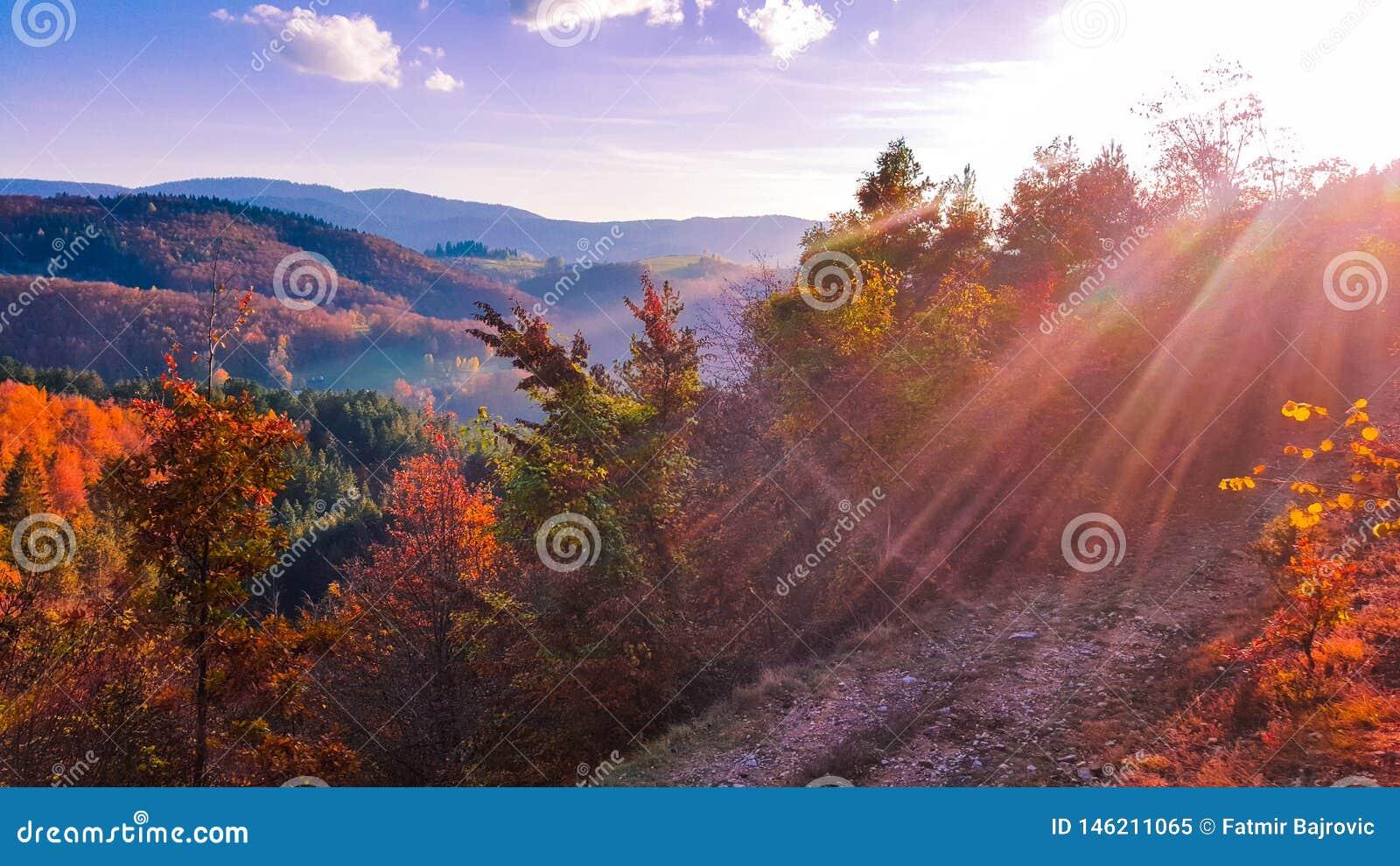 Le bel horizontal d automne Couleurs d octobre La beaut? de couleurs d automne des arbres