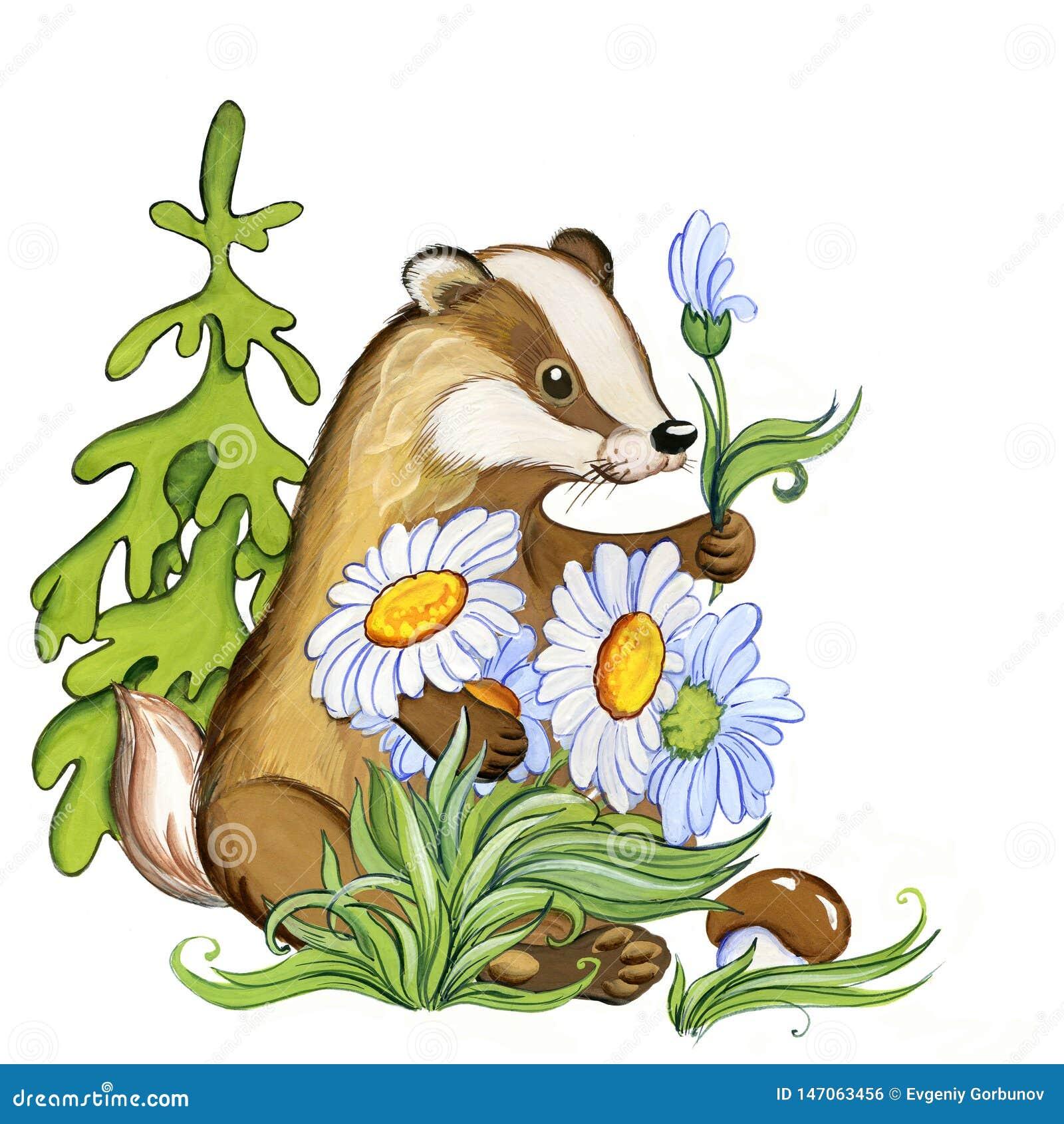 Le blaireau donne les fleurs blanches de forêt, illustration d aquarelle