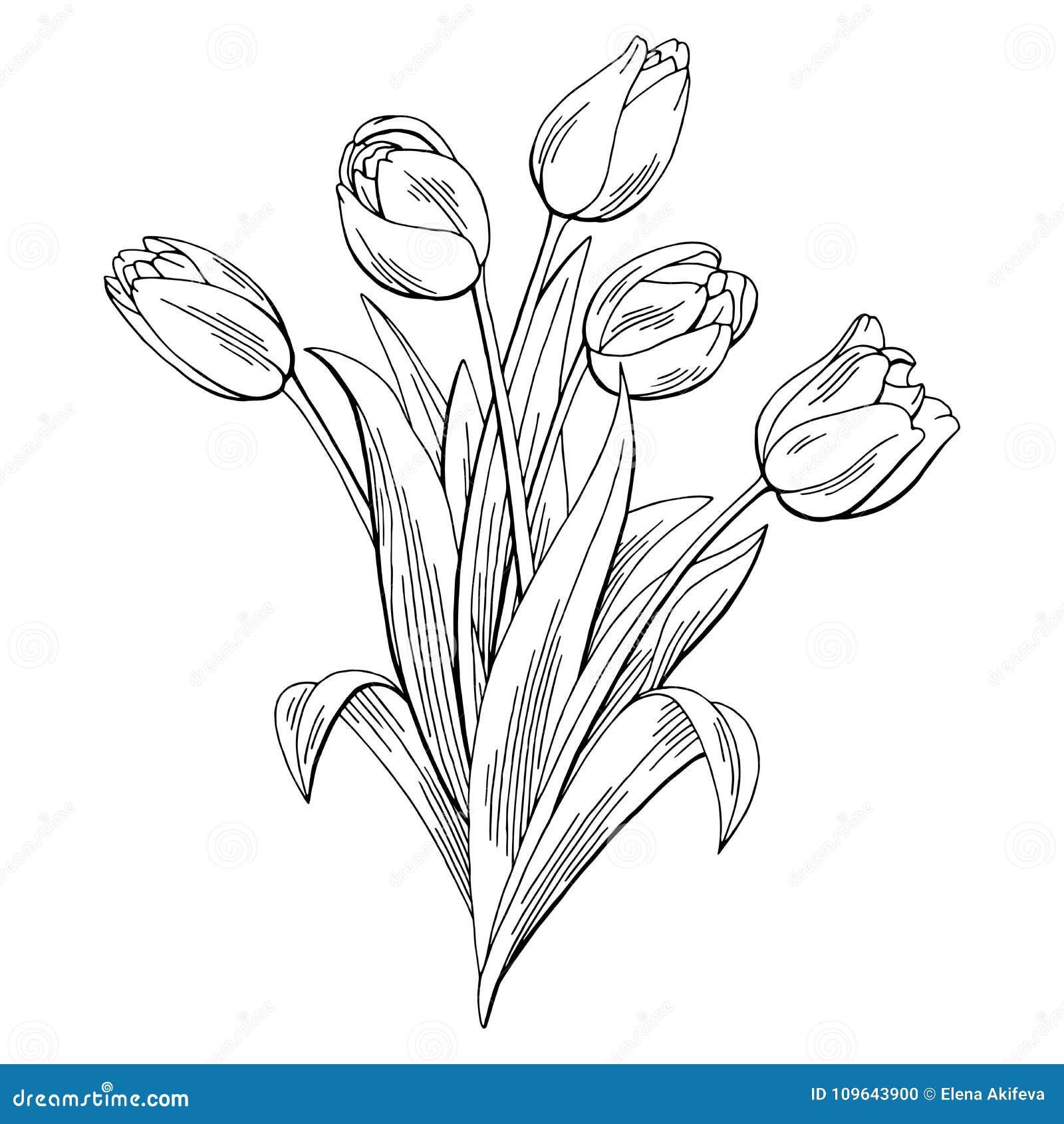 Le Blanc Noir Graphique De Fleur De Tulipe A Isolé Le