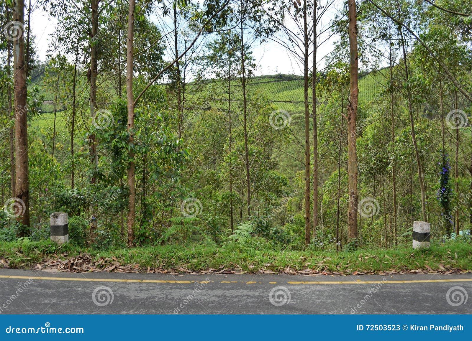 le bord de la route a inclin for t d 39 arbre montagne de jardin de th photo stock image 72503523. Black Bedroom Furniture Sets. Home Design Ideas