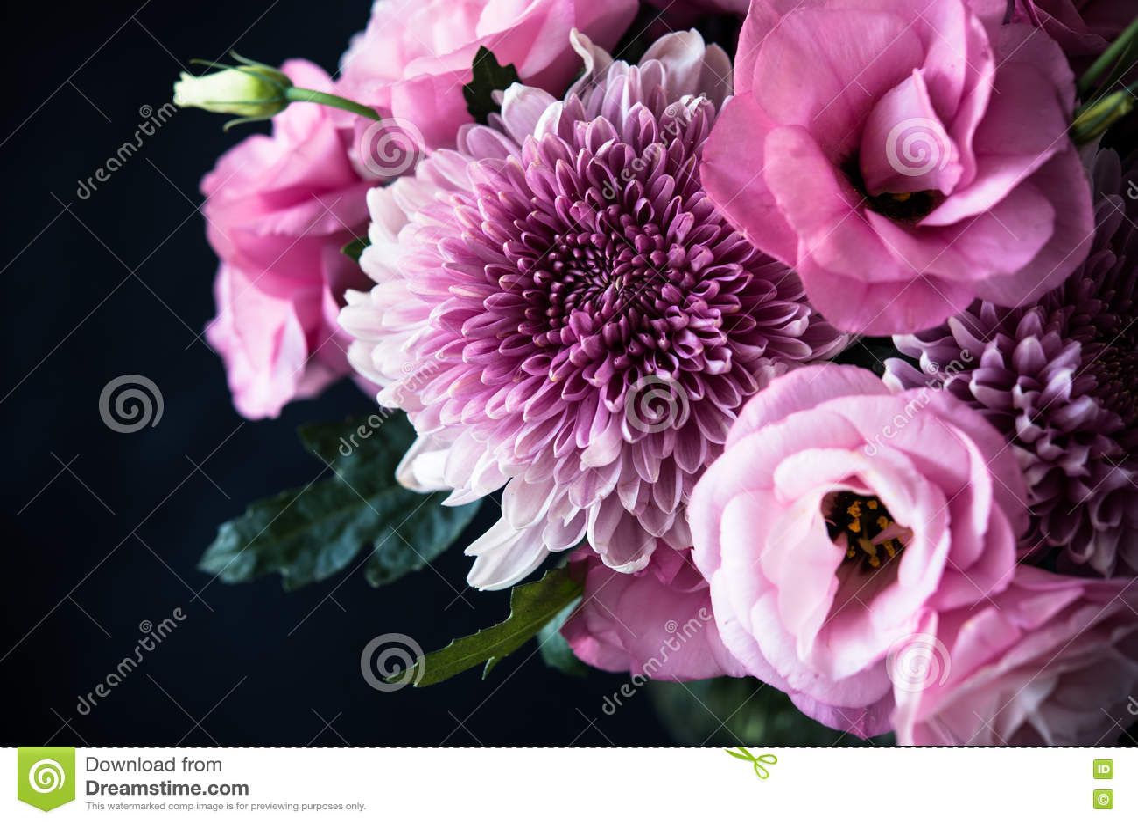 Le bouquet du rose fleurit le plan rapproché sur le fond noir