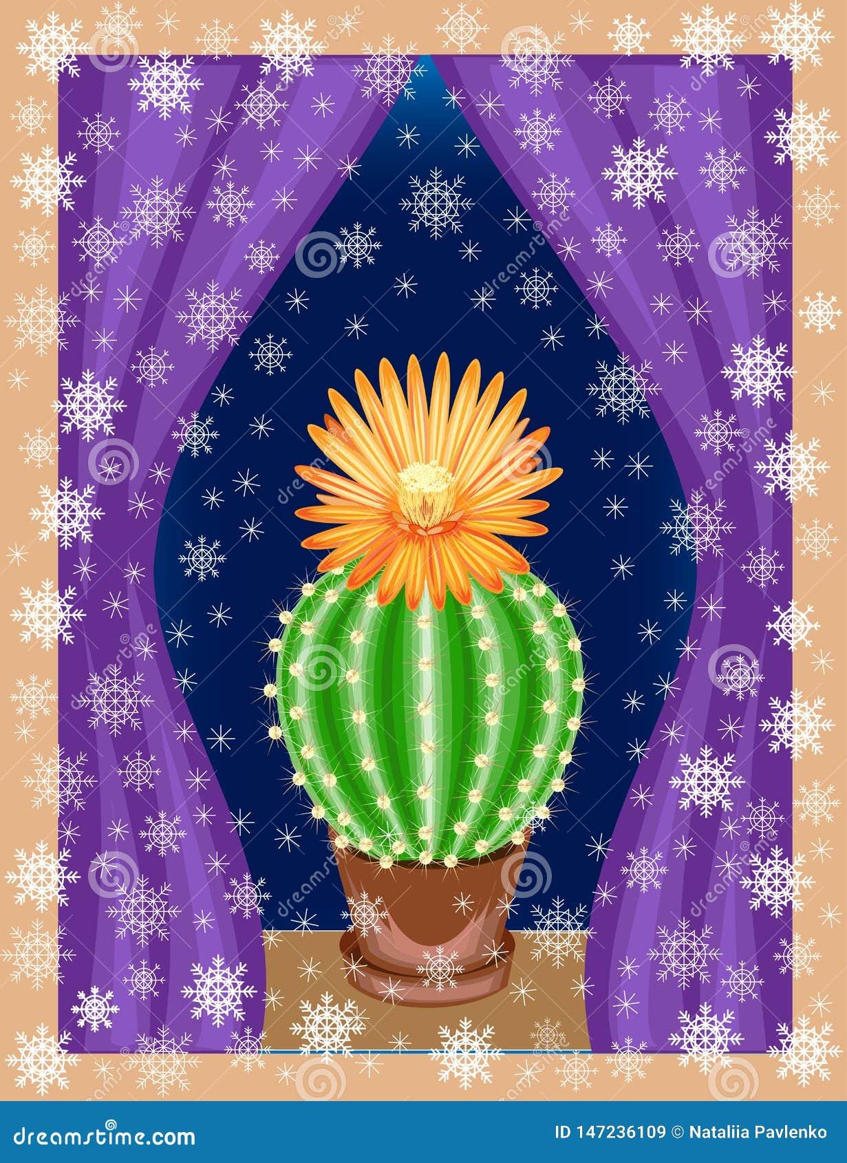 Le cactus se d?veloppe dans la maison sur le rebord de fen?tre L usine est exotique, avec une belle fleur Et en dehors de la fen?