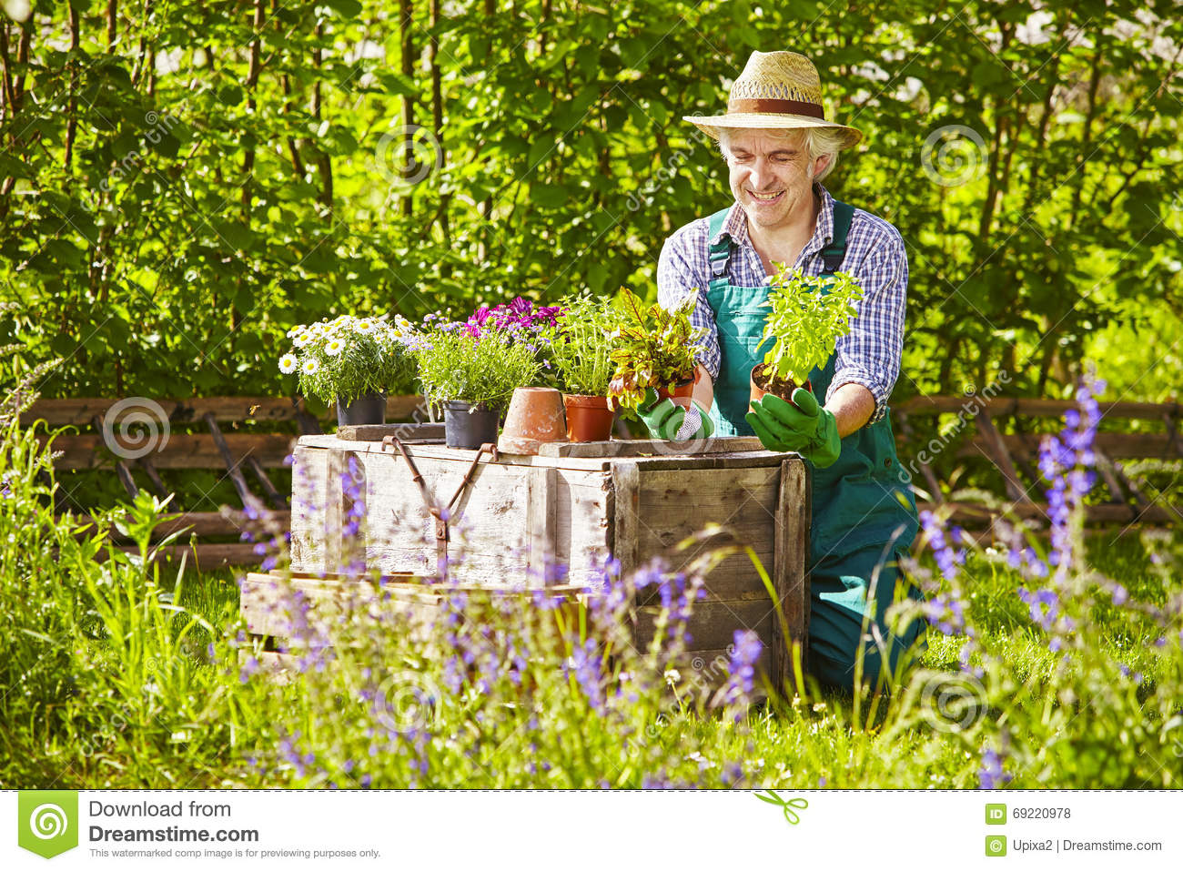 Le chapeau de paille de jardinier plante le jardin photo stock image 69220978 for Plante de jardin