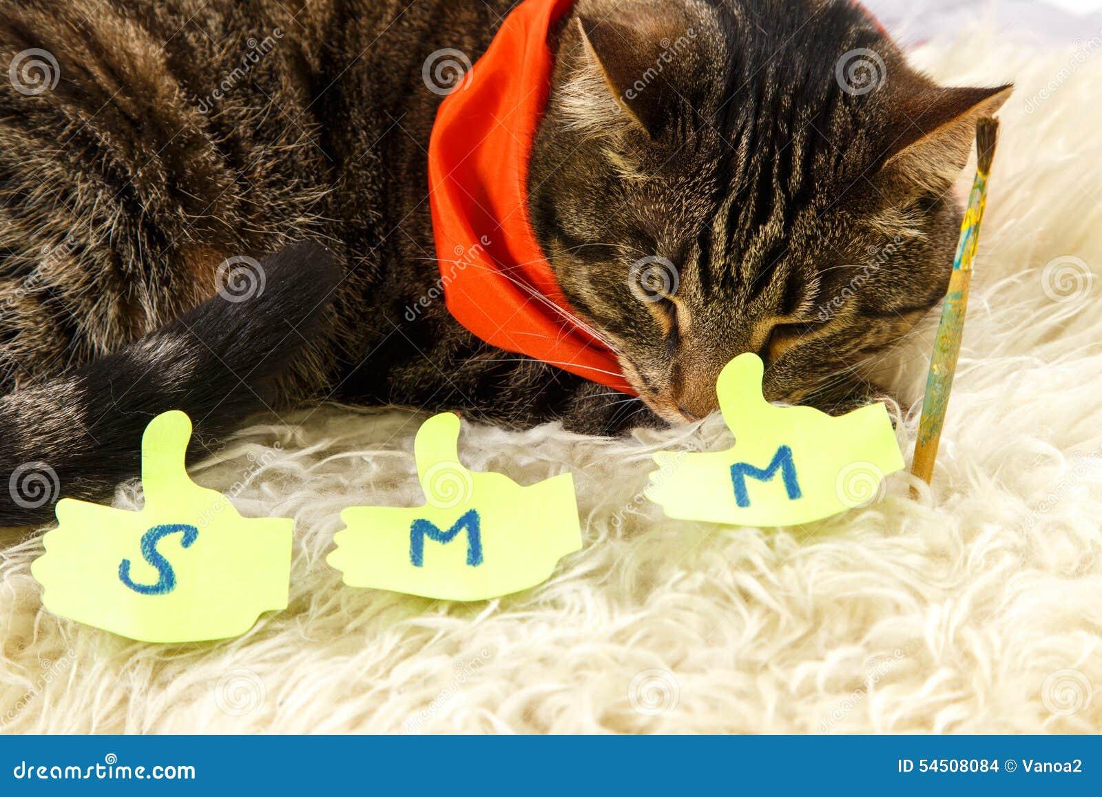 Le chat créatif dort avec des labels de SMM