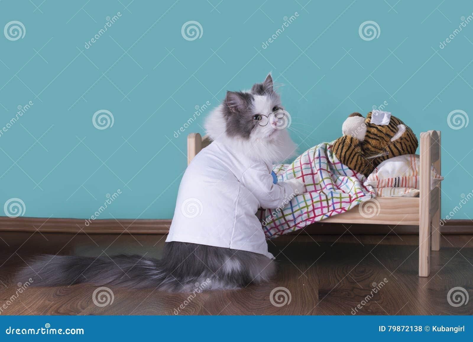 Le chat dans un costume du docteur traite le tigre