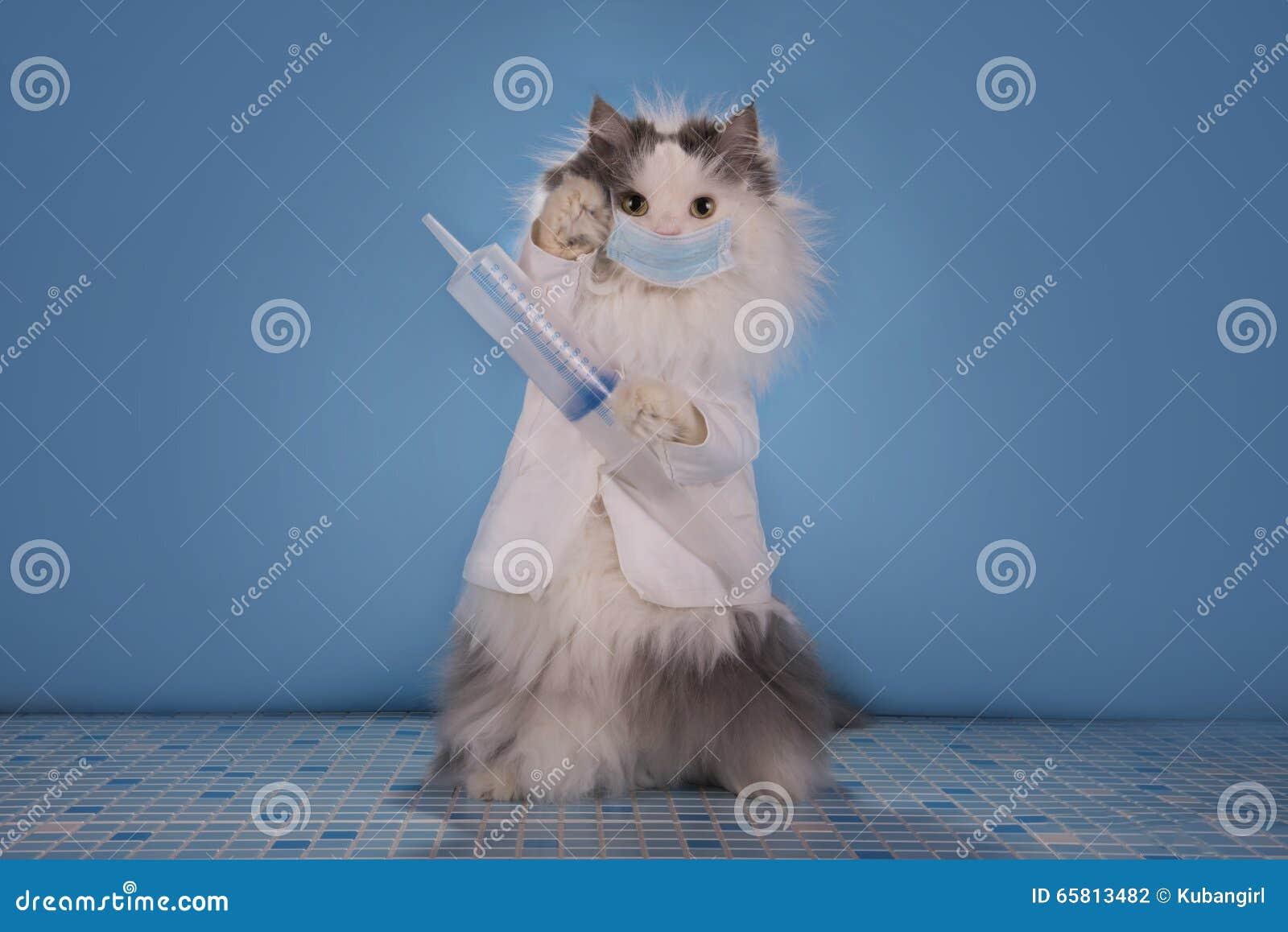 Le chat dans un docteur de costume indique comment traiter l épidémie de l infl
