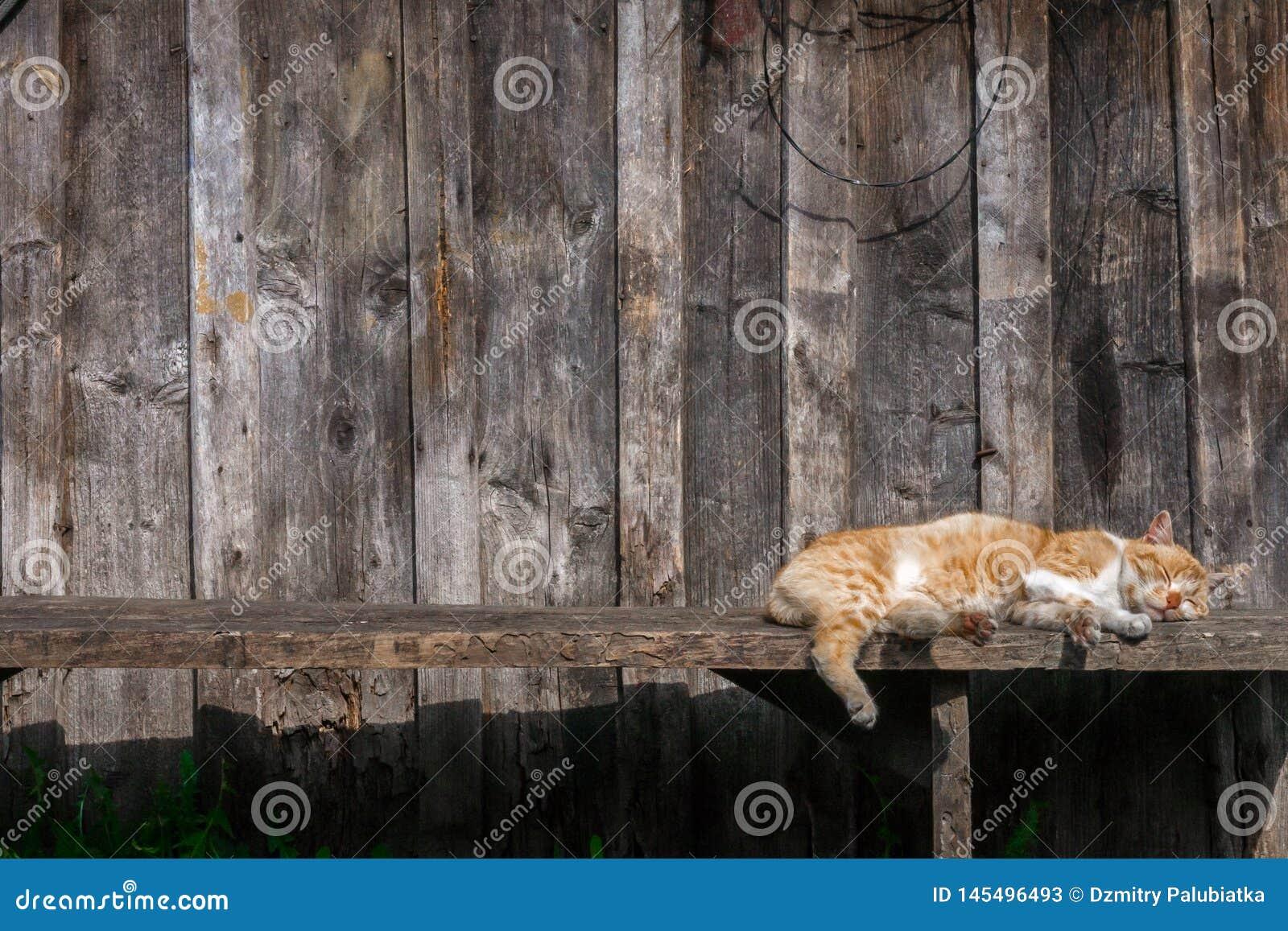 Le chat de Brown détend sous le soleil
